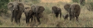 5 Day Amboseli / Mara / Tsavo Air Safari